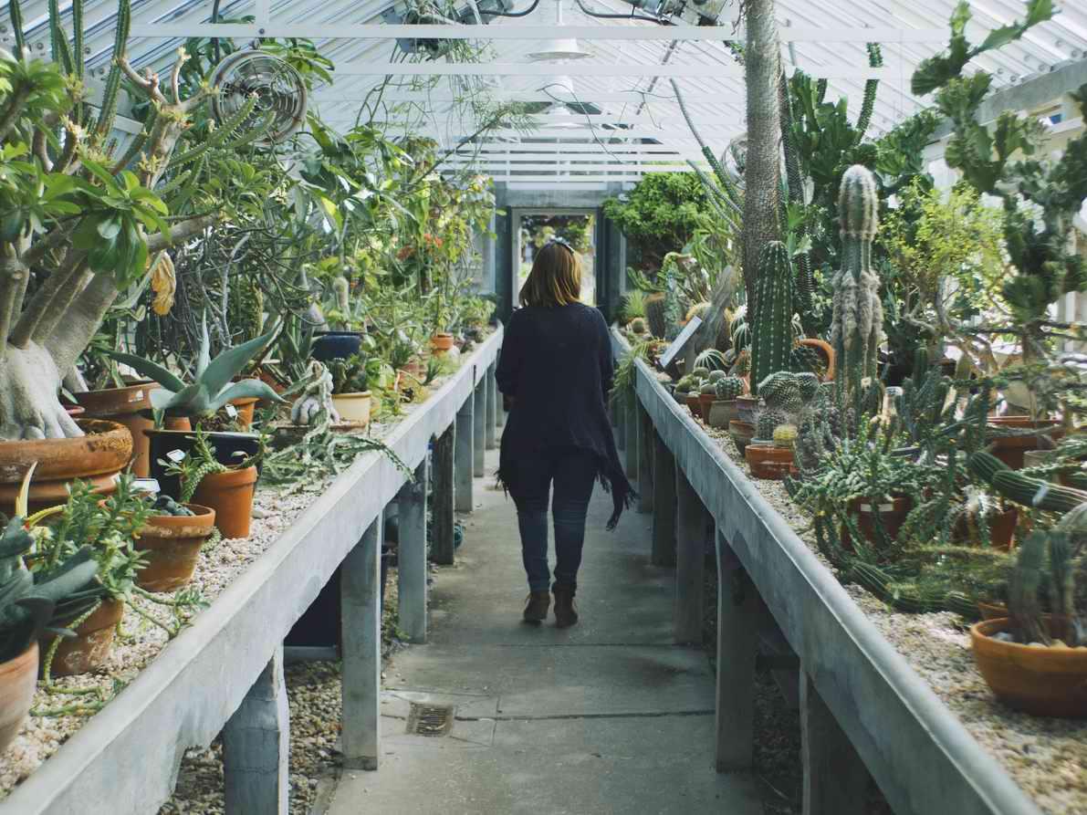 Homebox Gewächshaus Pflanzen